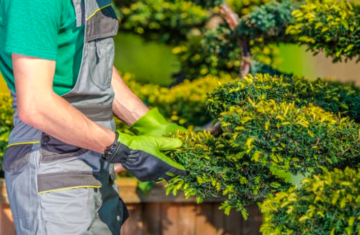this image shows landscaping services in Chino Hills, California