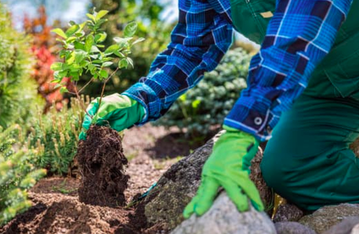 this image shows planting and gardening service in Chino Hills, California